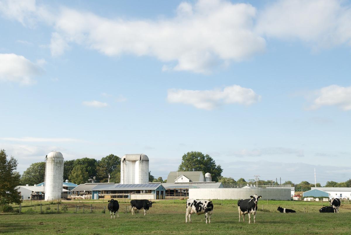 UD Dairy