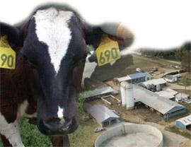 cow_farm