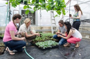 UD students are learning about the step-by-step processes involved in getting food from farms to their plates in a new Farm-to-Table class. Pictured are (from left) Barbara Hahn, Sue Barton, Staci DeLucia, Ali Keith and Elana Berk (standing).
