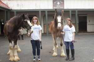 UD students train colts for New Castle County Mounted Patrol