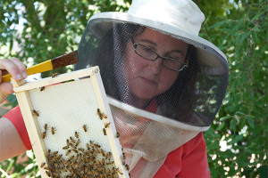 UD professor Deborah Delaney helped Delaware officials with a bee spill on I-95