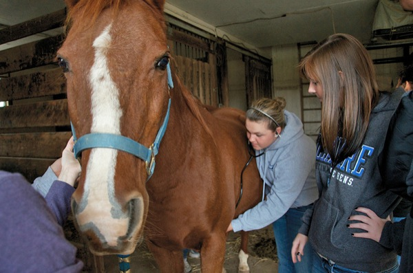 Equine Studies importance of minor subjects in college