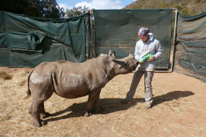 Sydney Bruck worked in South African rehabilitation center and veterinary clinic