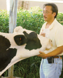 Dr. Limin Kung conducts forage and silage quality research and extension programs worldwide. The Dairy Nutrition and Silage Fermentation Laboratory has hosted visiting scientists from Brazil, Egypt, Turkey, and Israel, all of whom sought to collaborate with the laboratory because of its innovative research and outreach programs with the dairy industry.