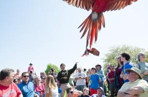 ag-day-2013-bird-show