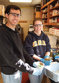 Undergraduates and graduates vary in their prior experience with dairy science. Students who work in the dairy science laboratories are typically animal science majors; however, students from other departments throughout the university have participated in dairy research.
