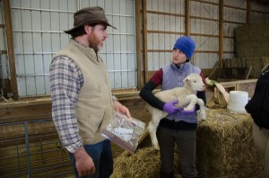 Larry Armstrong and Kaitlyn Lutz work with UD's lambs.