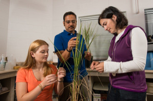Dr. Harsh Bais, Plant and Soil Science and his graduate students Nicole Donofrio (maroon/white shirt) and Carla Spence (orange shirt) study rice plants.