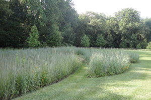 UD's Sue Barton touts the benefits of meadows over lawns