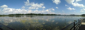 A panoramic view of the impoundment at John Heinz National Wildlife Refuge at Tinicum. (Sept. 2014).