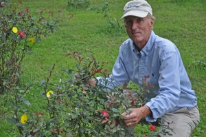 UD's Tom Evans is part of a research group that has been awarded $4.6 million by the U.S. Department of Agriculture to study methods to combat rose rosette disease.