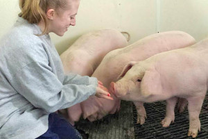 Amy Cherico and Brittney Anderson complete swine internship at New Bolton Center